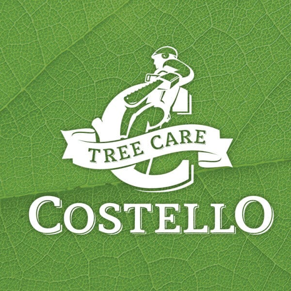 Tree Care Logo Design
